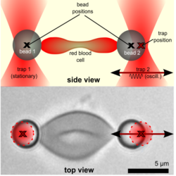 Micro Rheology Of Cells And Soft Matter With The Nano Tracker