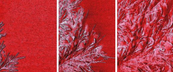 NanoWizard® 4 NanoScience AFM - JPK BioAFM | Bruker